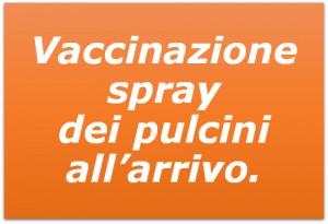 Vaccinazione Spray dei pulcini all'arrivo_Z