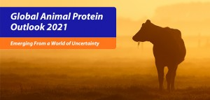 Global animal protein_